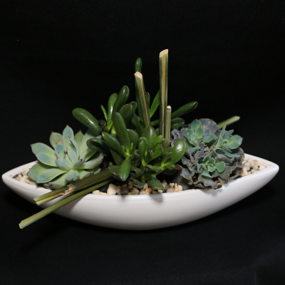 "Ninth Street Flowers Durham - An assortment of succulent plants, arranged artistically in a ceramic ""boat"" container."