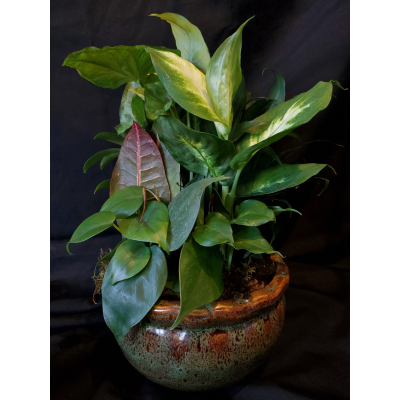 "Ninth Street Flowers Durham - Collection of green plants in decorative ceramic container. Suitable for medium to low light. Easy care. Available in Standard 8"" ceramic container or Premium 10"" ceramic container. Container design and color will vary."