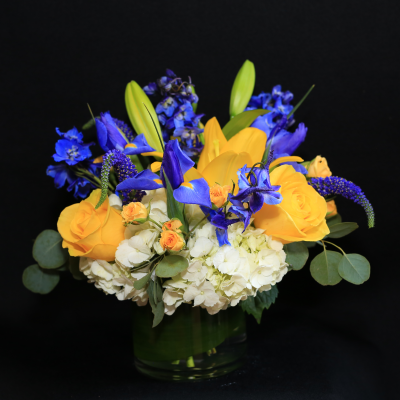 Ninth Street Flowers Durham - Perfect as a gift for parents of a newborn baby boy, this European compact-style arrangement has a base of hydrangeas, with lilies, roses, spray roses, iris, delphiniums and Veronica, in an artistic and striking color palette.
