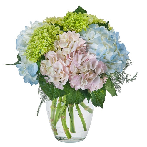 Georges Flowers Roanoke Va Florist Same Day Flower Delivery